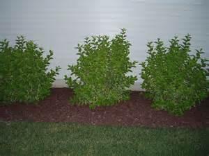 shrubs garden center plant nursery home landscape
