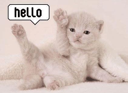 imagenes de hola romanticas hola gatito gatito saludando