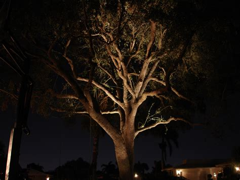 Tree Landscape Lighting Nitelites Of Jacksonville The Landscape Lighting