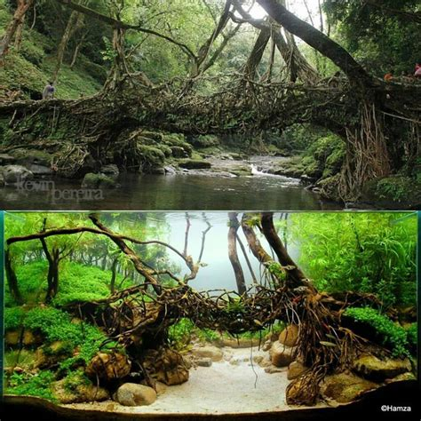 aquascape aquariums aquascape version of a living root bridge dream garden