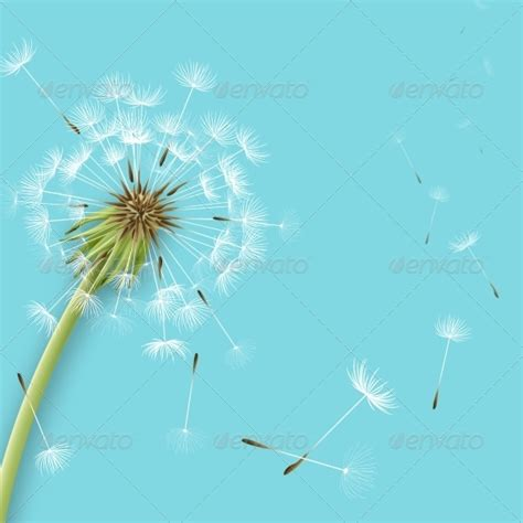 wallpaper bunga dandelion animasi bunga dandelion 187 tinkytyler org stock photos