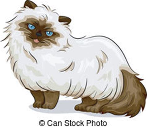 Himalayan Cat Drawing
