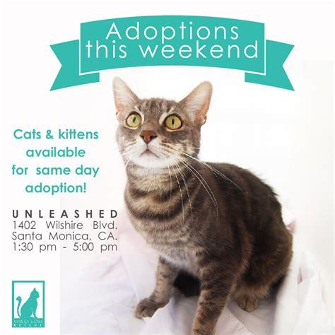 adoption events near me cats cats cats rescue pet adoption santa santa ca photos yelp