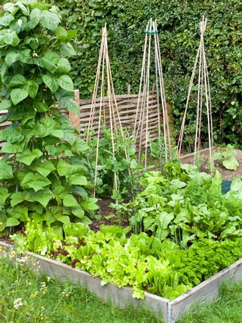 how to build a raised bed vegetable garden how to build a raised vegetable bed hgtv