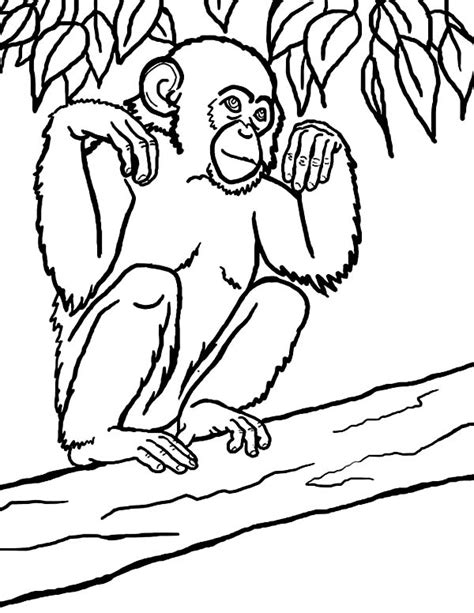 free coloring pages of chimpanzees