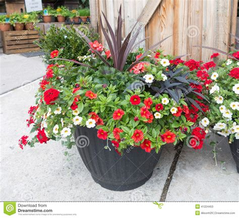 flowers in planter stock image image of gardens floral