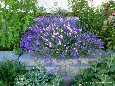 fun diy ways to preserve garden fresh foods
