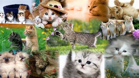 cat wallpaper collage cat kitten collage kitten collage 2 cute kitten cats
