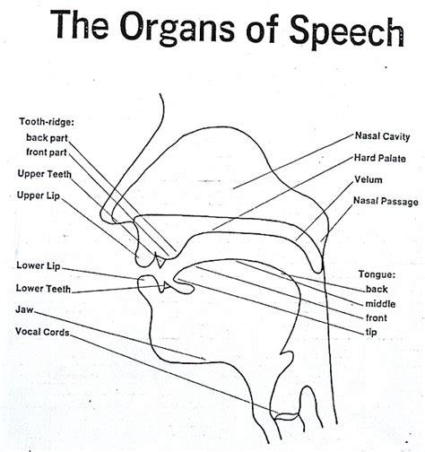 what part of speech is diagram vocal organs of speech