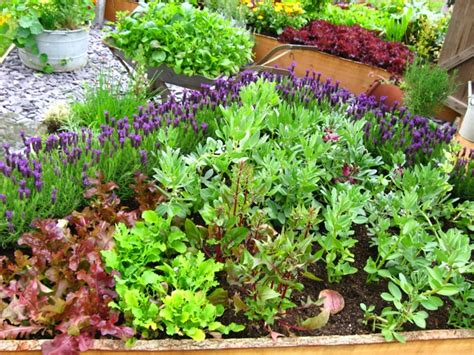 Patio Vegetable Gardening by Ewa In The Garden Vegetable Garden Ideas