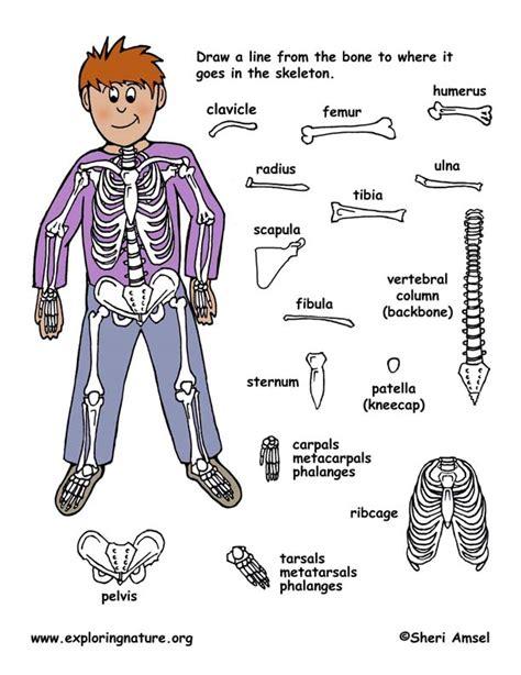 bones of the body worksheet worksheets releaseboard free printable worksheets and activities