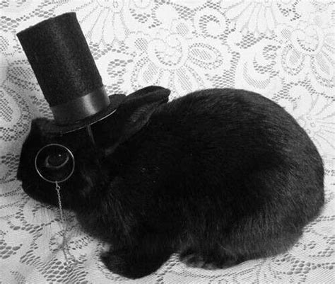Top Rabbit With Hat 17 best images about bunnies in hats bows costume