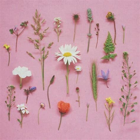 flower wallpaper aesthetic flowers image 3805089 by winterkiss on favim com