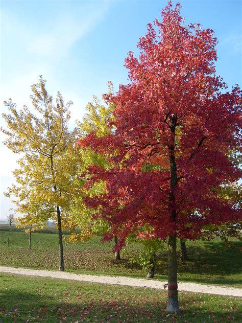 alberi colorati da giardino albero