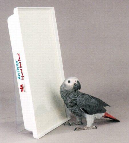 Permalink to House Finch Birdhouse Dimensions – Birdhouse plan for PJ   cabane d'oiseaux et plan