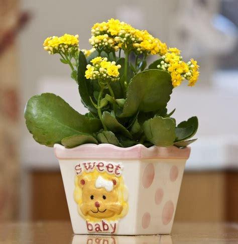 Tanaman Hias Kalanchoe Kuning tanaman kalanchoe kuning bibitbunga