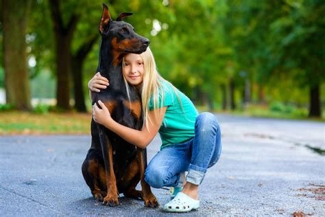 how to a doberman puppy how to a doberman puppy a step by step guide
