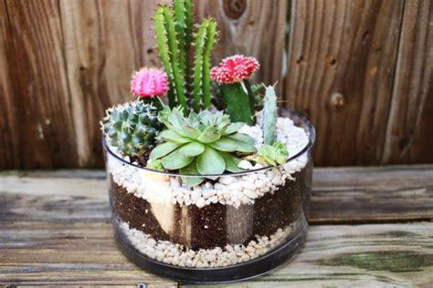 Cactus Planter Ideas by Diy Cactus Garden Idea Home Design Garden