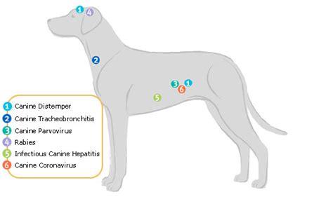 fondle face dog diseases canine hepatitis