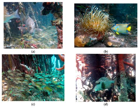 american tropics the caribbean roots of biodiversity science flows migrations and exchanges books diversity free text a unique coral community in