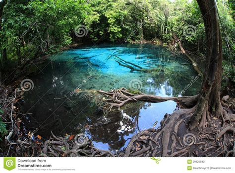 Tropical Forest Plant - emerald pool krabi thailand stock photography image 29125842