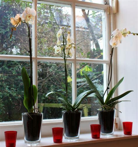 blumen fensterbank innen mit zimmerpflanzen das zuhause dekorieren 60 beispiele