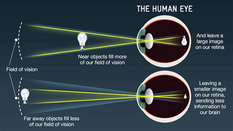 what part of the eye sees color how the eye sees eye condition disorders and home