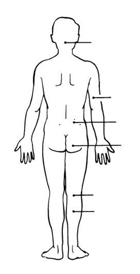 anatomical position diagram anatomical position diagram blank www imgkid the