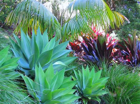 tropical plants for backyard tropical garden design ideas harmony in landscape design