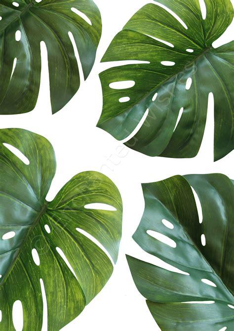 Leaf Print monstera leaves print tropical botanical leaf print