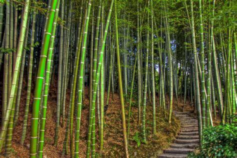 bamboo garden bamboo garden kōdai ji temple kyoto