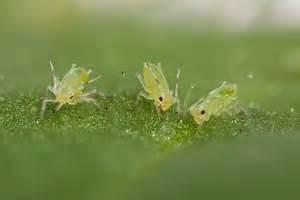 ameisenplage garten fliegende ameisen in haus und garten bek 228 mpfen