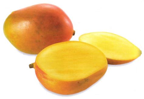 Fruit Mango mango destination konkan
