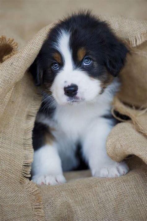 pouting puppy awwww pouting puppy doggies