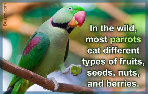 what type of food do parrots eat the answer may surprise you