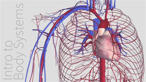 introduction   cardiovascular system animated tutorial complete anatomy youtube