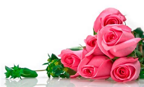 imagenes de rosas por cumpleaños regalar flores por su significado florister 237 a arrixaca