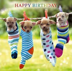 chihuahuas birthday card hanging out together cute puppy