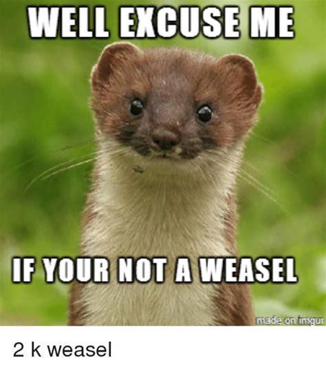 well excuse me if your not a weasel on inngu weasel meme