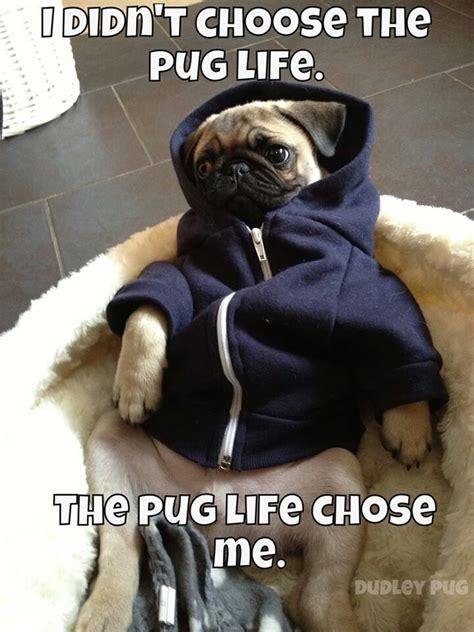pug chose me the pug chose me animals
