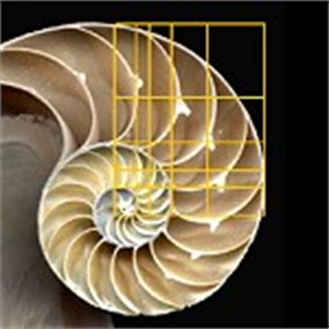 the golden section in nature life archives the golden ratio phi 1 618