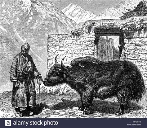 Mongol Steel geography travel tibet mongolian with yak