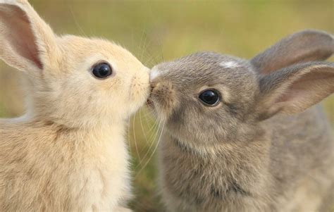 animal valentines 14 animals prove that kisses aren t just for