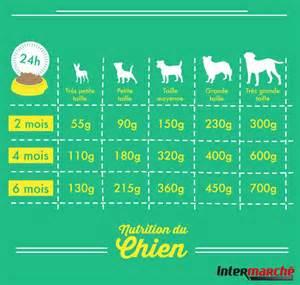 les outils et produits dangereux pour les animaux domestiques