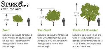 Tree Canopy Size Chart by Fruit Tree Sizes Stark Bro S