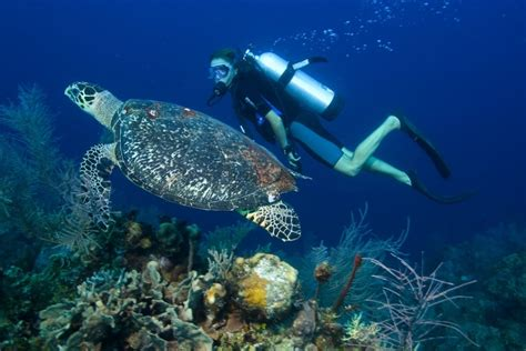 dive cozumel cozumel dive packages diversity diving scuba diving in