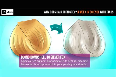 why our hair turn white siowfa15 science in our world watch why does our hair turn grey sciencealert