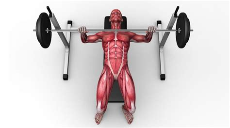 different bench press exercises the 3 best exercises to build muscle coach calorie