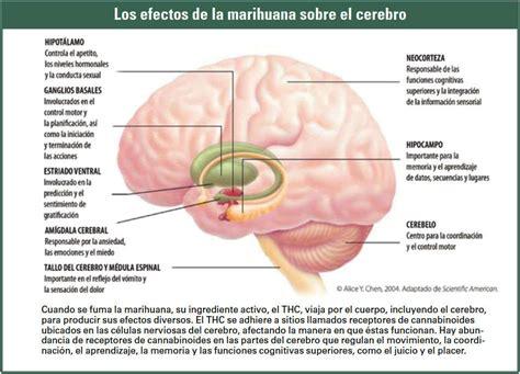 imajenes de como es el celebr 191 c 243 mo produce la marihuana sus efectos national