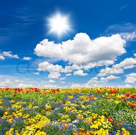 bunte blumen bunte blumen auf blauem himmel stockfoto colourbox